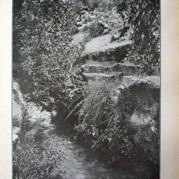 1907-08-25-p