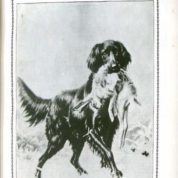 1902-03-02-p