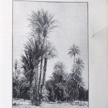 1911-02-12-p