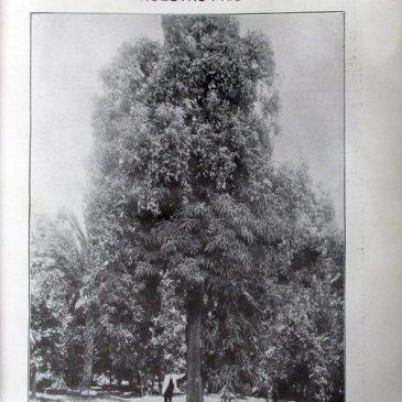 1912-07-14-p