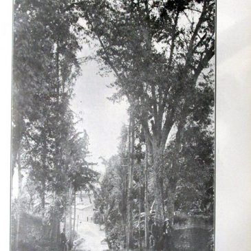 1912-03-10-p